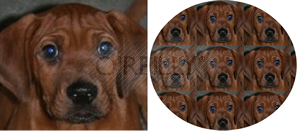 Examples of rendering a raster image in a graphic